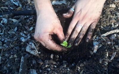 Planting at the Natural Farm